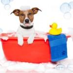 Tips & συμβουλές απο το online pet shop pet-astero. Πώς να κάνετε μπανιο το σκυλο σας