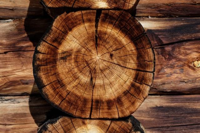 Κορμός ενός κομμένου δέντρου